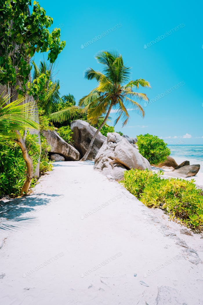 Walking footpath with palm trees leading to the beach at anse source d'argent, la digue
