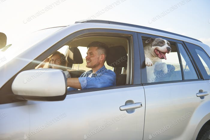 Young couple and their dog traveling by car