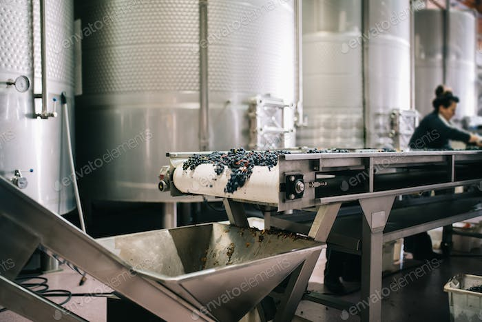 Woman working in a winery