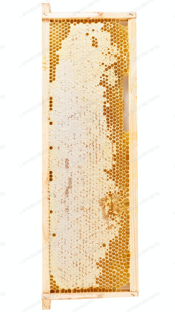 bee honeycomb closeup, fresh stringy dripping sweet honey, isolate vertical