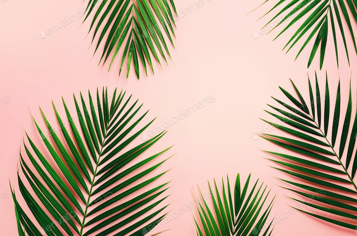 Tropical palm leaves on pastel pink background. Minimal summer concept. Creative flat lay with copy