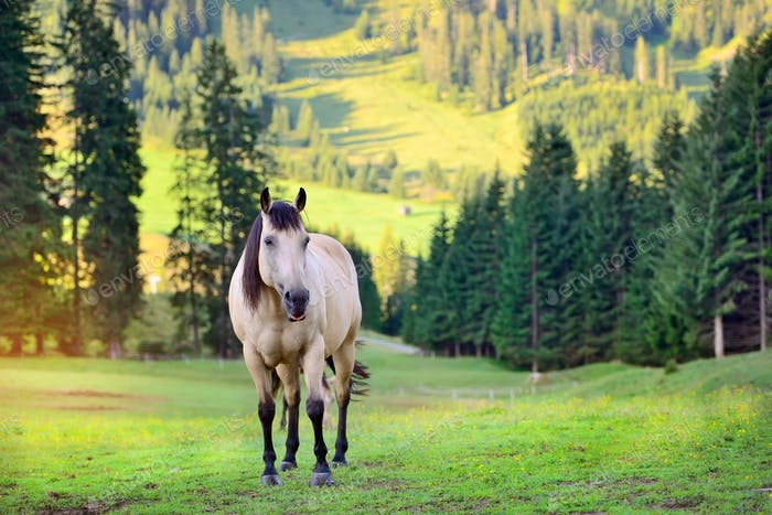 Horse on the meadow in the mountains