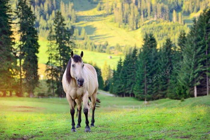 Pferd auf der Wiese in den Bergen