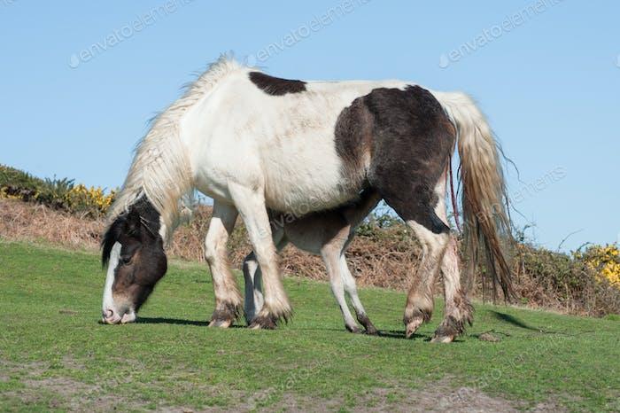 Thumbnail for newborn foal feeding