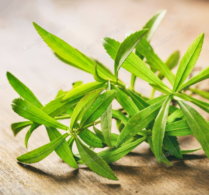 Fresh tarragon plant leaves on wooden background.