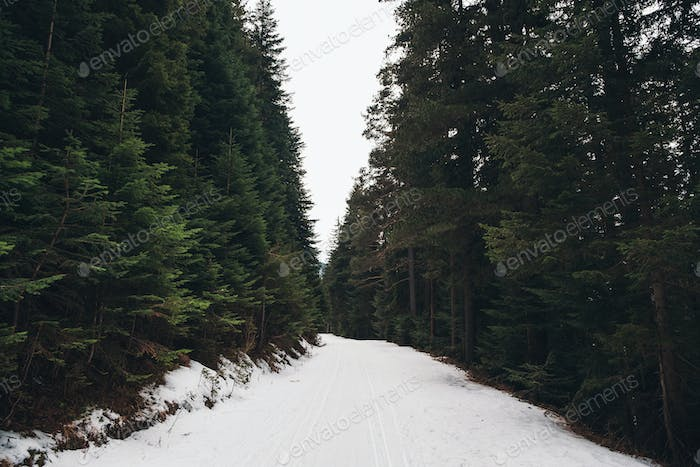 Road covered with snow in the mountain forest