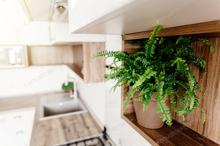 Kitchen interior with modern cabinets and green plants