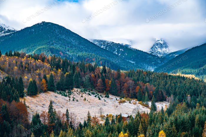 Deforestation in the mountains of Carpathian