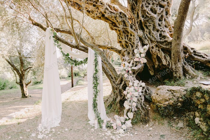 elegant wedding arch in olive trees park