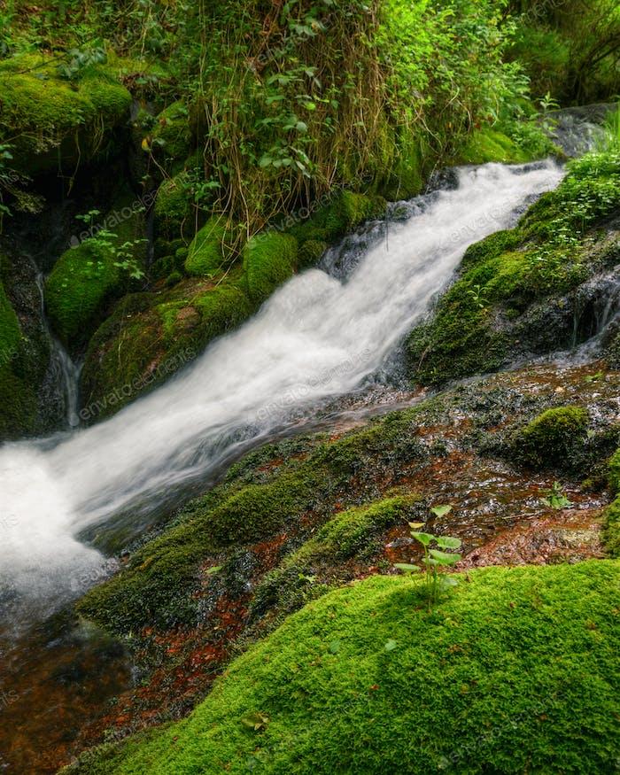 A Stream runs through a Mossy, wet Rocky slope