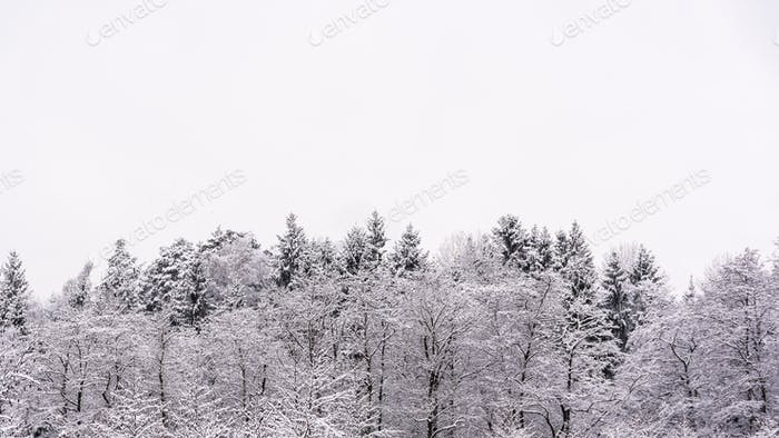 White winter landscape forest and fields countryside