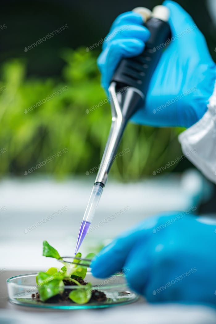 Biologist doing experiments with plant root
