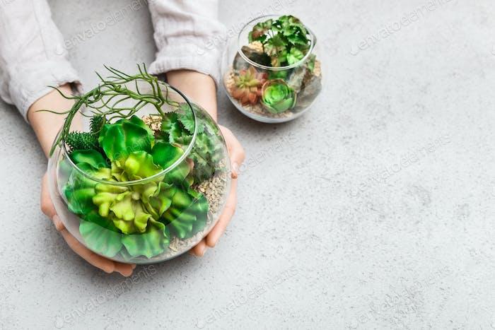 Woman's hands holding mini succulent garden in glass florarium