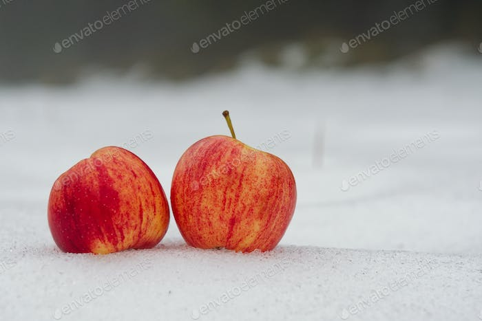 Two red apples on a white snow