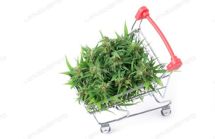fresh marijuana flower in shopping cart isolated on white background