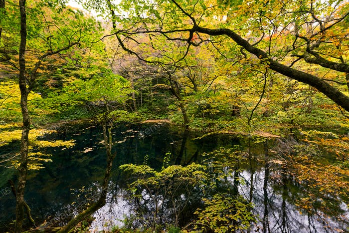 Beautiful autumn lake and forest