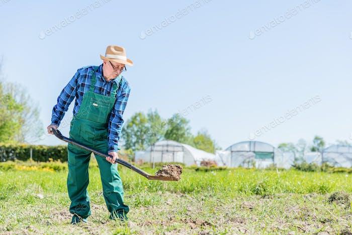 Senior Gärtner gräbt mit einer Schaufel im Garten.