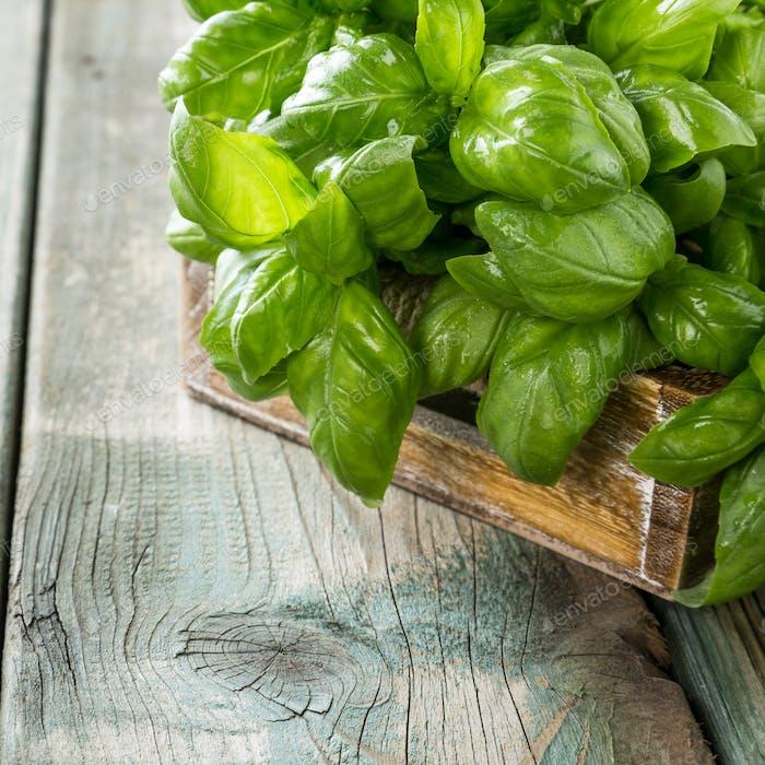Green basilic leaves