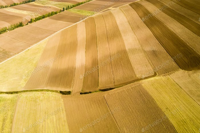 farmland texture background in autumn