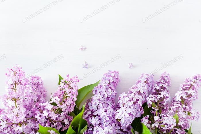beautiful lilac flowers on white background