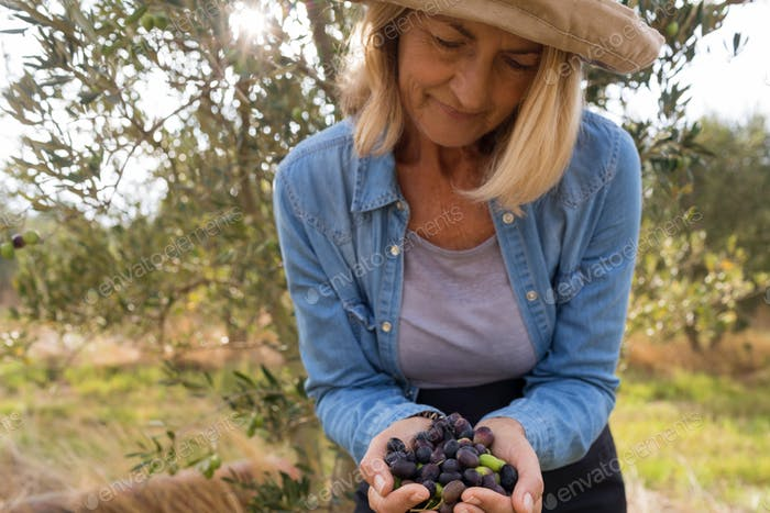 Close-up of woman holding harvested olives in farm