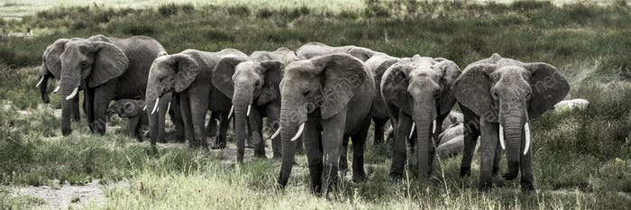Group of elephants in Serengeti National Park