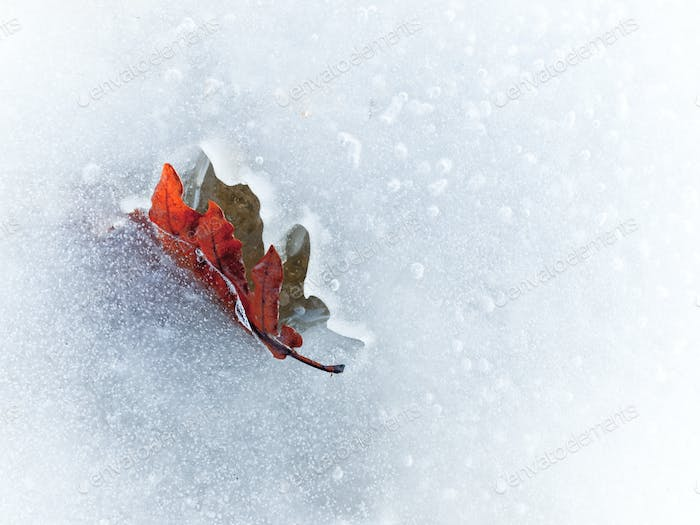 Autumn leaf frozen in the ice
