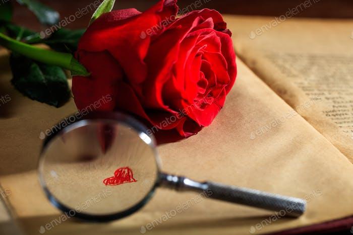 Lupe und rote Rose auf einem Buch