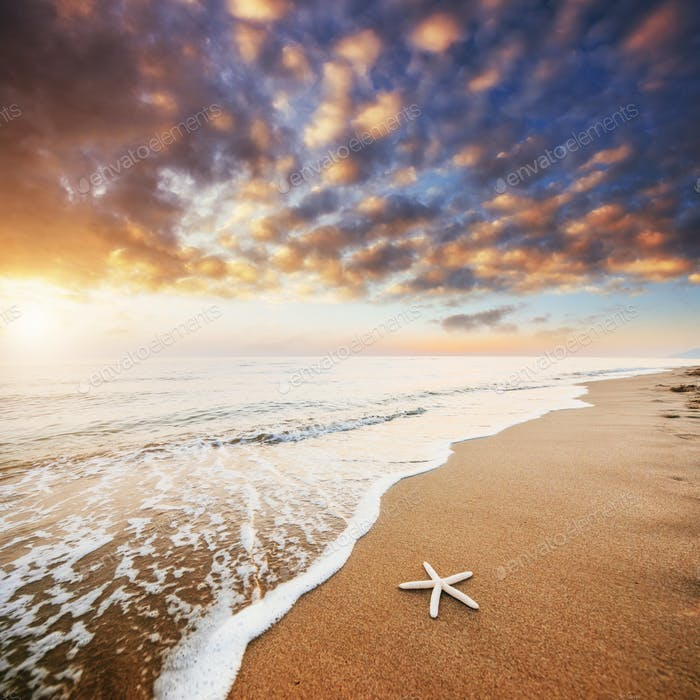 Starfish on the beach. Romantic composition