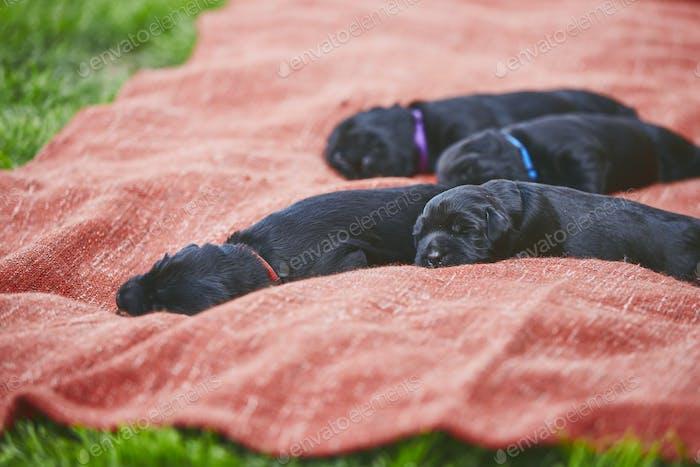Newborns of dog