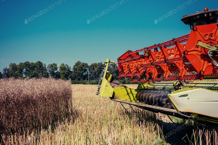 Combine Harvester on a Wheat Field. Agriculture