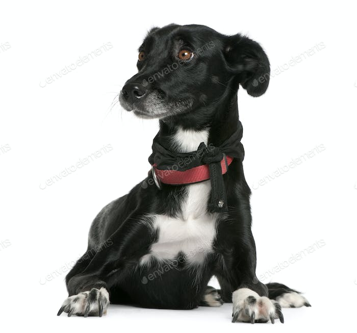 Mixed-breed, 18 months old, lying in front of white background