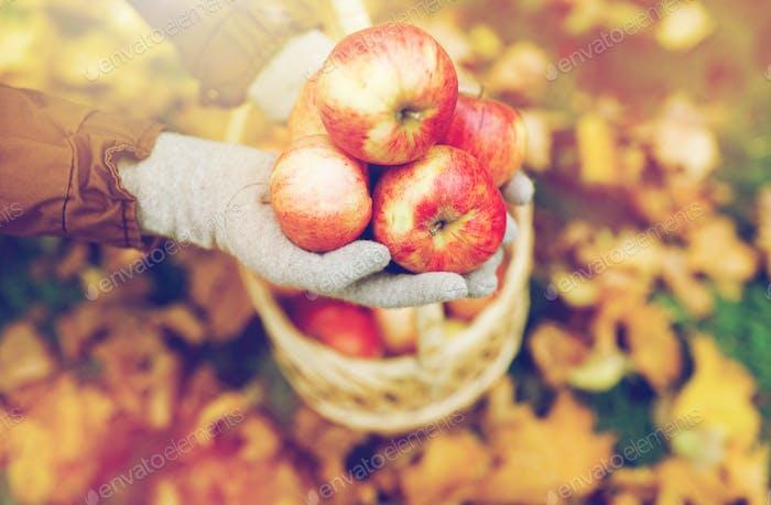 Frau mit Korb von Äpfeln im Herbst Garten