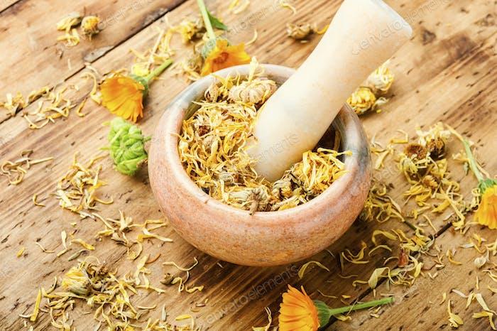 Calendula for herbal medicine.