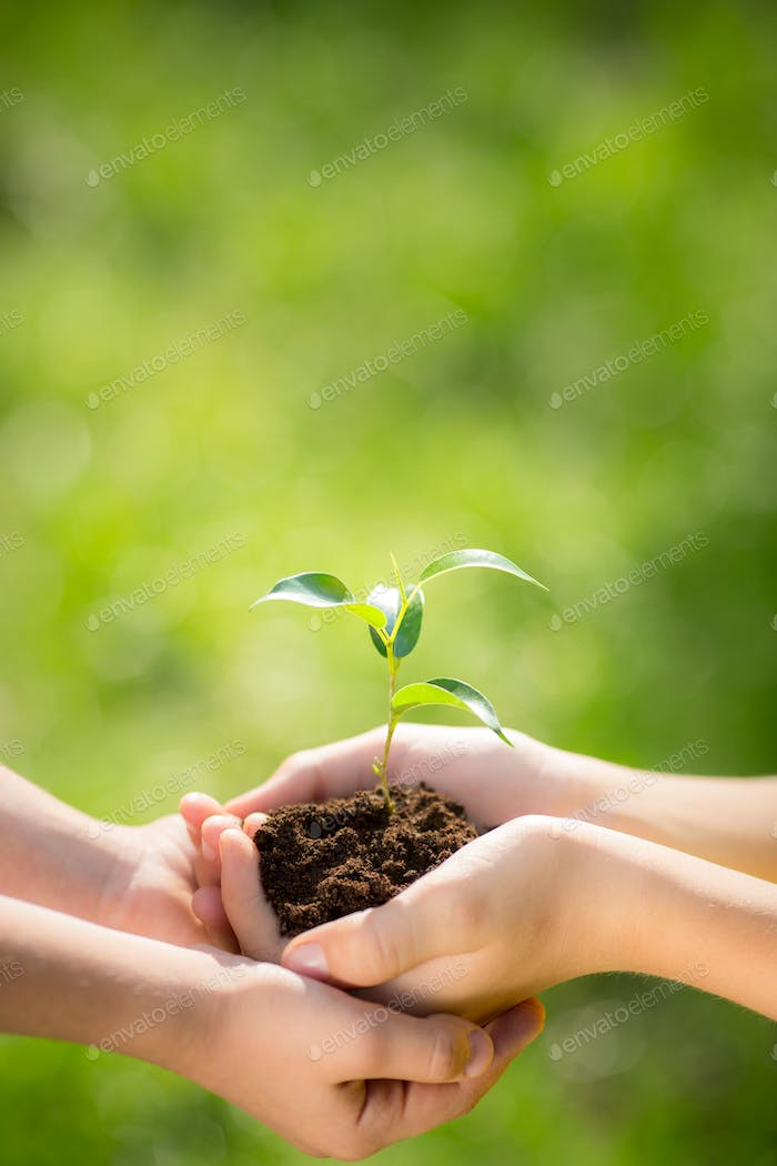 Children holding young plant in hands