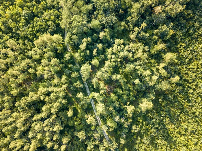 Top view of a forest of deciduous trees and expensive sunny day. Aerial view from the drone. Foliage