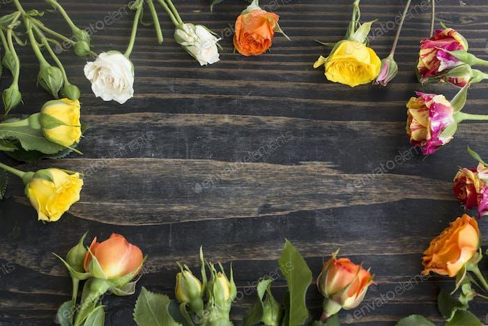 Bunte Rosen mit Kopierraum