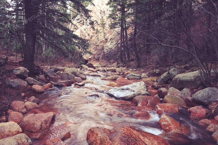 Scenic Colorado Forest River