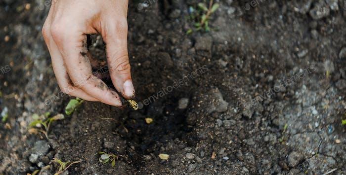 Abgeschnittenes Bild eines Bauern, der Kardamomsamen in den Boden pflanzt
