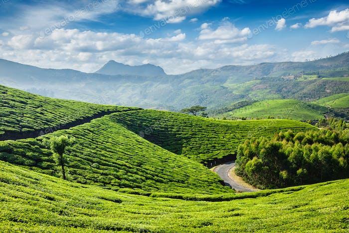 Thumbnail for Tea plantations, Munnar, Kerala state, India