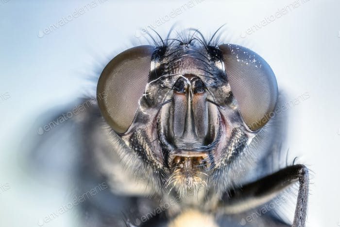 fly eye closeup