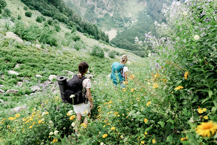 A back view of hikers with backpacks going on a mountain expedition along the trail