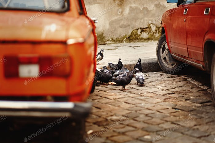 Group of pigeons eating on the road near red old car in european city