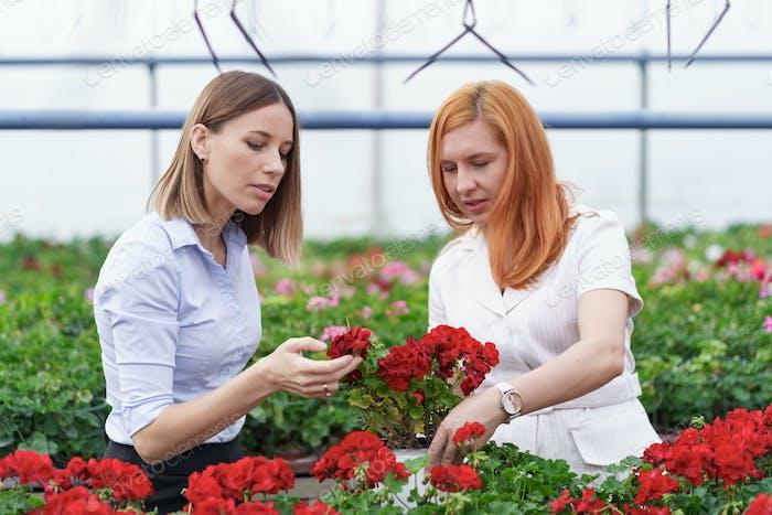 Zwei Geschäftsfrauen unterhalten sich beim Besuch des Gewächshauses