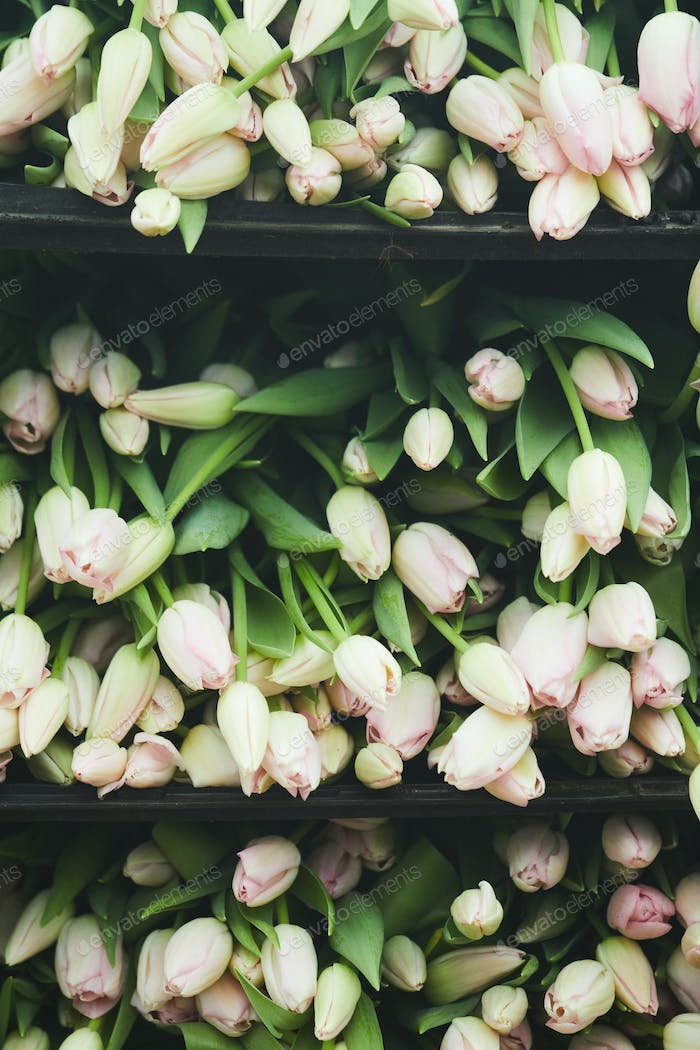 White tulips in the shop
