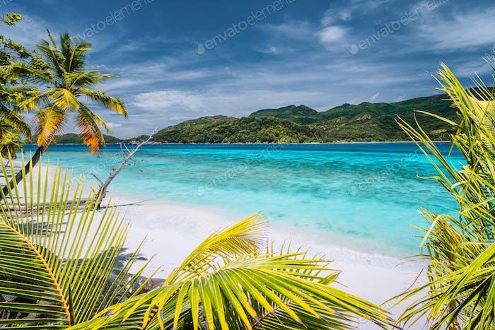 Urlaub Urlaub Hintergrund exotische Tapete. Palmen am tropischen Strand. Blaue Ozean-Lagune und