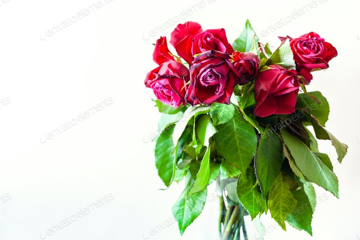 bouquet of wilted red rose flowers with copyspace