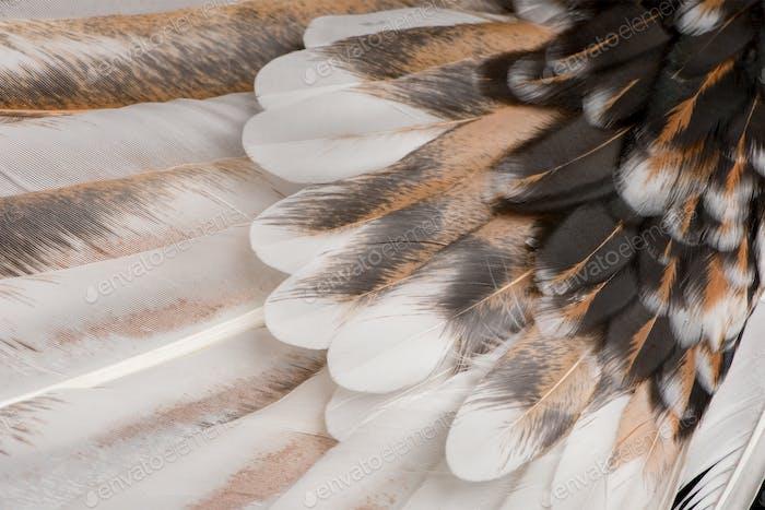 Nahaufnahme von Tollbunt dreifarbige Polnische Hahnfedern, 6 Monate alt