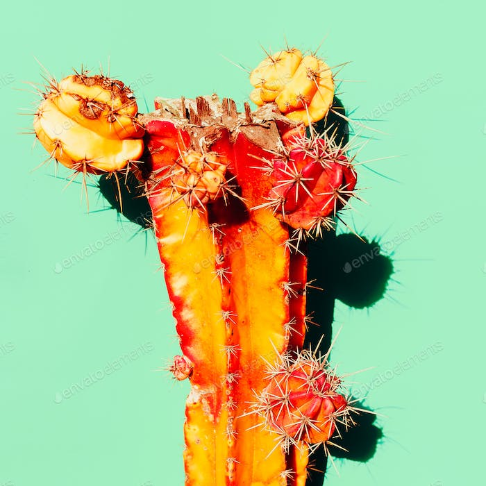 Orange Cactus with shadow. Creative design. Minimal art gallery