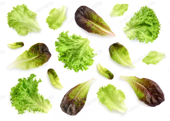 Fresh lettuce leaves isolated on white background. Pattern with